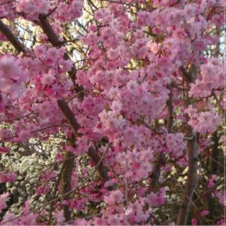 Spring into Life Coaster
