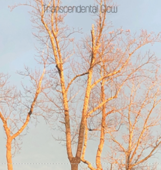 Transcendental Glow Coasters Dhruti Rathi Studio